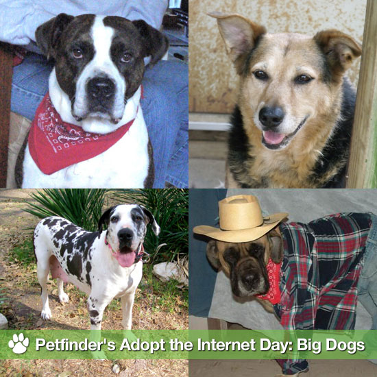 Petfinder's Adopt the Internet Day: Big Dogs