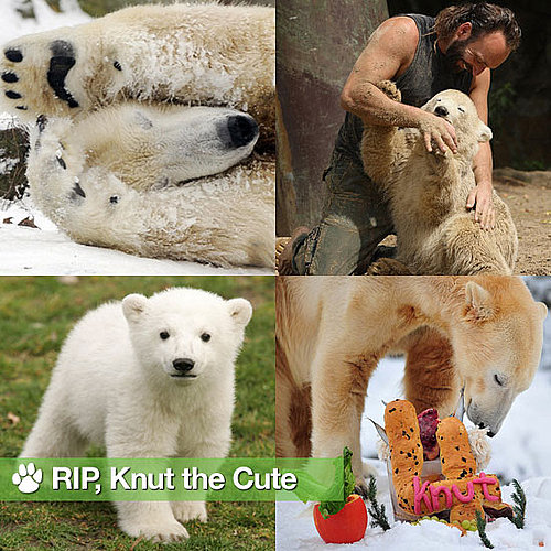 Knut the Polar Bear Dies