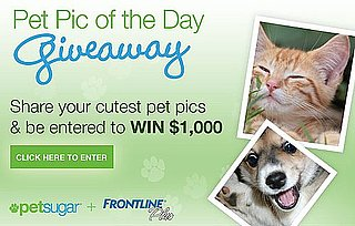 Show Off Your Cute Pet Pics and Win $1,000 From FRONTLINE Plus!