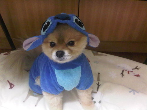 It's a Dog...No it's Stitch From Disney...No it's Both!