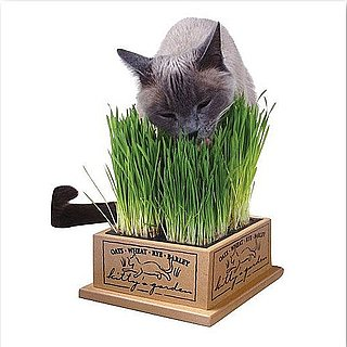 DIYs and Eco-Friendly Products For Cats