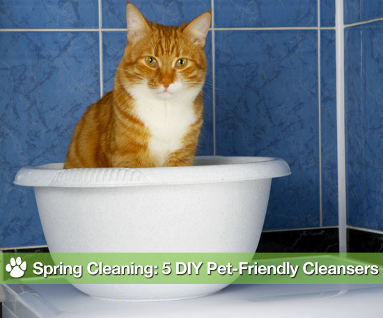 Spring Cleaning: 5 Kitchen Items to Double as Pet-Friendly Cleansers