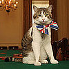 Pictures of Larry the Downing Street Cat