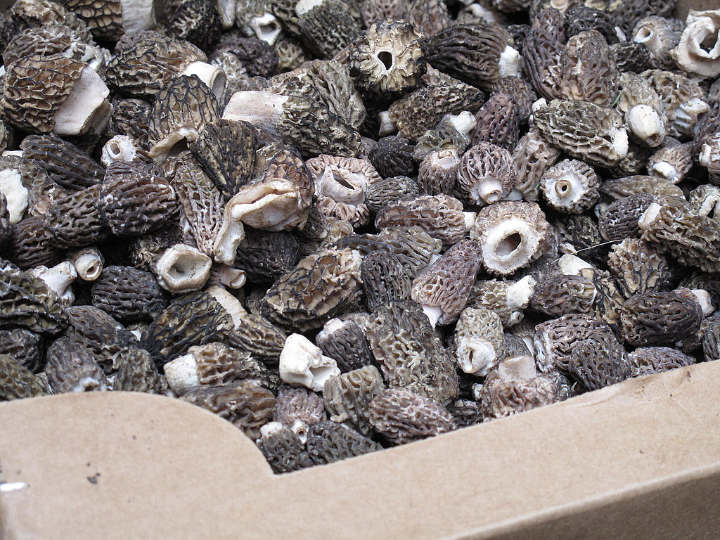 The Spring Food: Morels