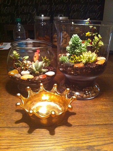 Twin Terrariums