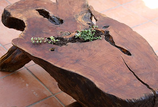 CasaSugar Community member Simply Sofie created a succulent table with this old burl table and a selection of plants. See how she did it here.
