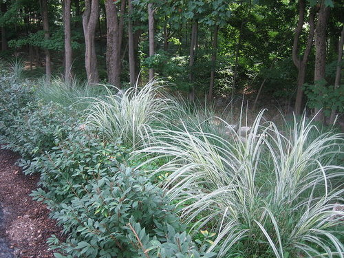 Glorious Grass - Adds drama and dimension to your garden.
