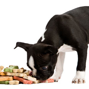 Pet Food Ingredient Glossary
