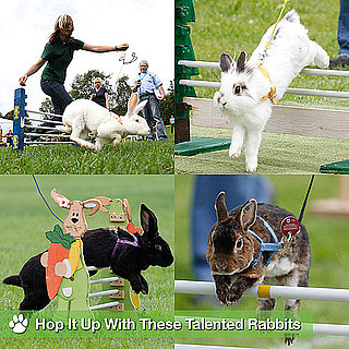 2011 Rommerz Rabbit Competition