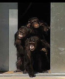 Real Life Story Behind Rise of the Planet of the Apes (Breaking news!) 