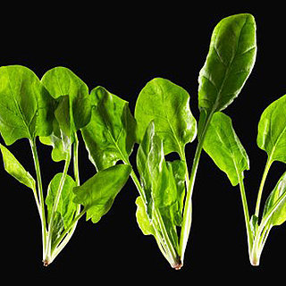 Why Spinach Makes Your Teeth Gritty