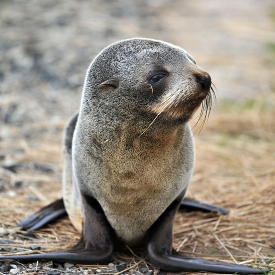 Cute Alert: Sweet Little Seals