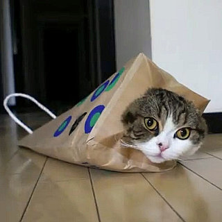 Maru Video With Paper Bags