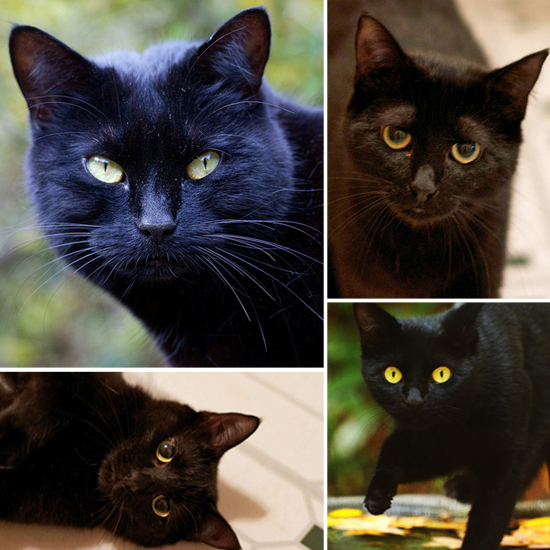 Spooky and Sweet Black Cats