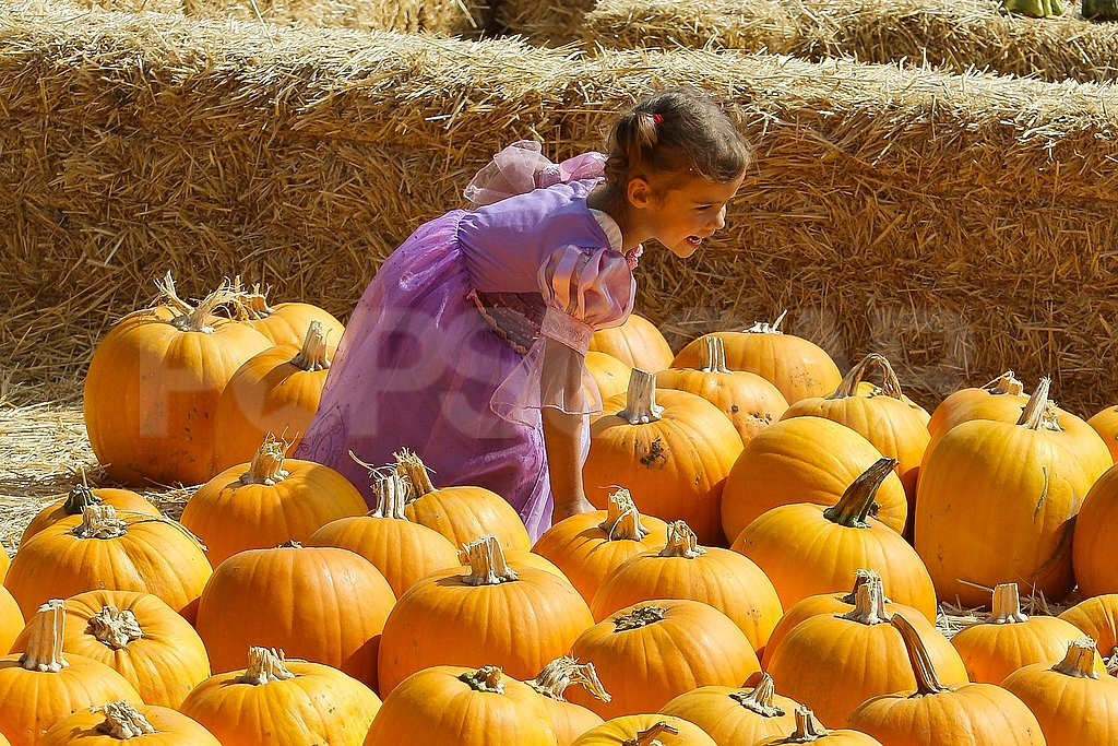 Honor Warren searched for a pumpkin in LA.