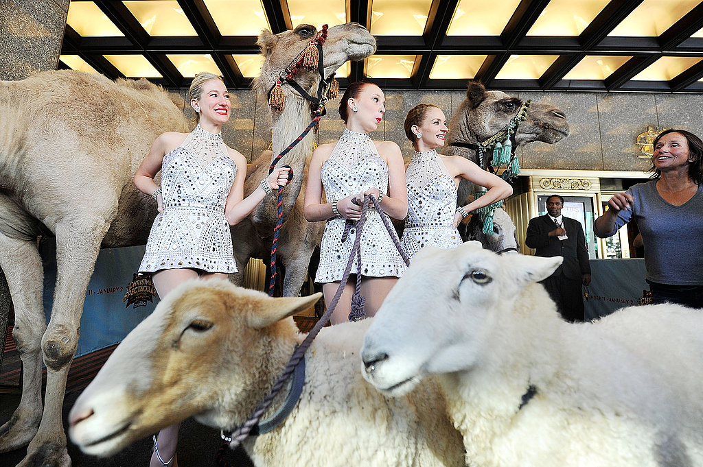 The Radio City Rockettes wrangle the animals for the living nativity.