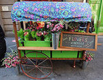 C. Wonder Flower Cart