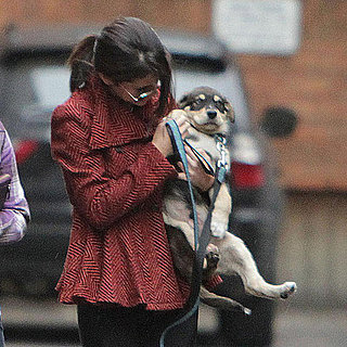 Selena Gomez Walks Puppy Baylor Pictures