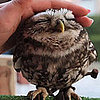 Cute Owl Video