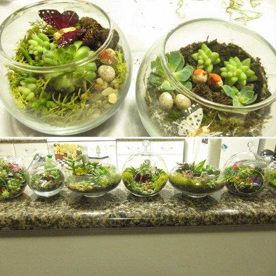 How to Make Terrariums
