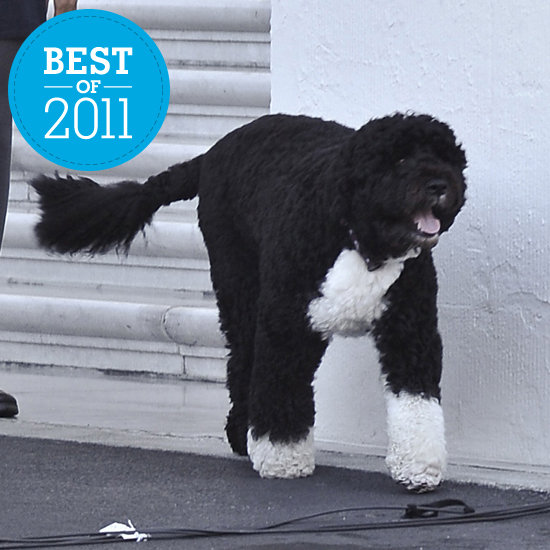 Hail to the Pooch: Bo's Best Moments of 2011