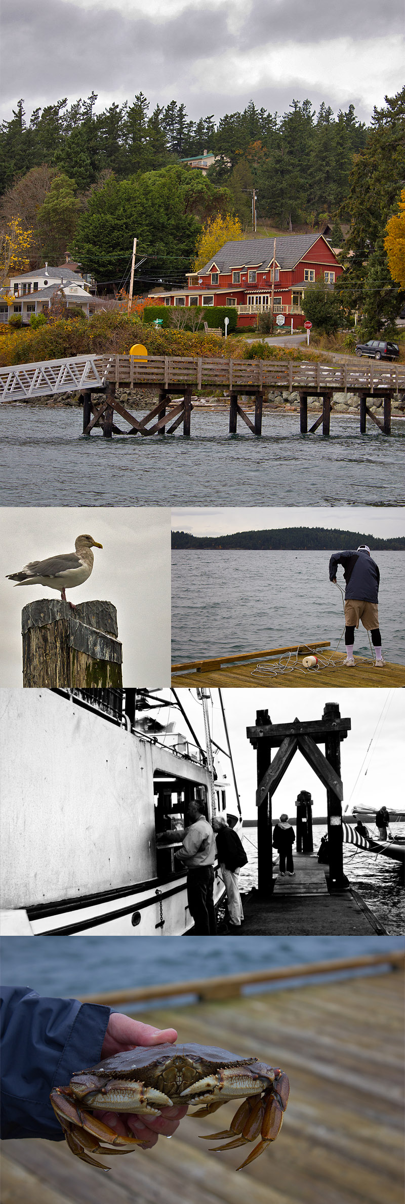 Dock Crabbing on Orcas Island