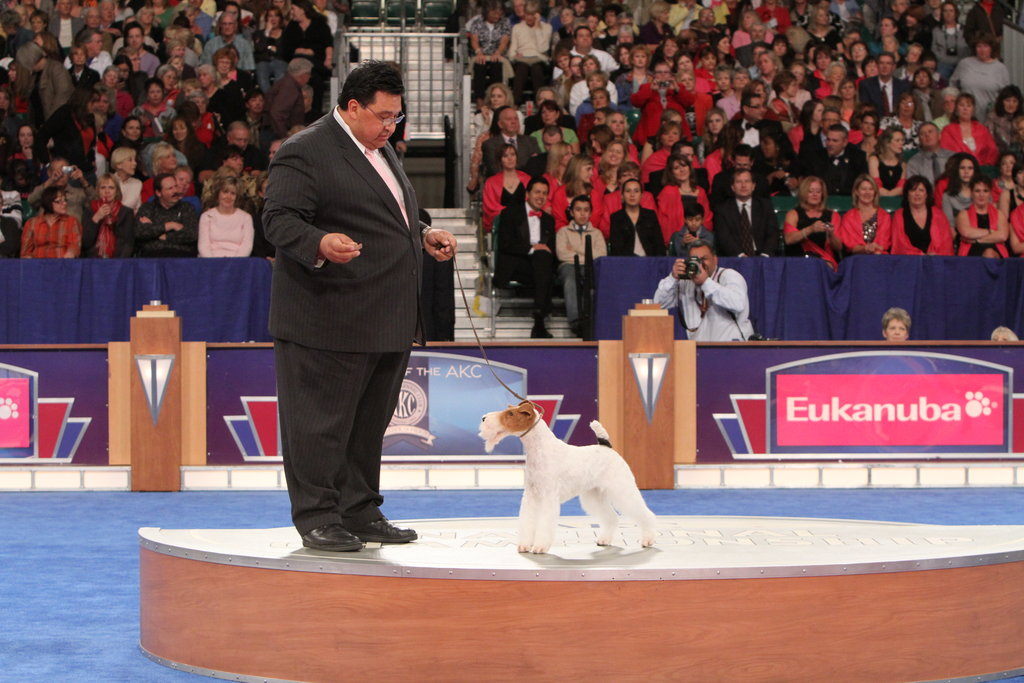 "GCH CH Steele Your Heart (""Eira"") stole the judge's heart and picks up the top spot in the Terrier group. Source: AKC/Robert Young"