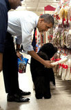 The world's most powerful dog is certainly not too important to run his own errands. Squeezing in some last-minute Christmas shopping, Bo and President Obama browsed the rawhide aisle at Petsmart on Wednesday. Source: Getty Images