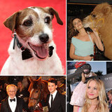 Momentous Menageries: 15 Memorable Animal Red Carpet Appearances