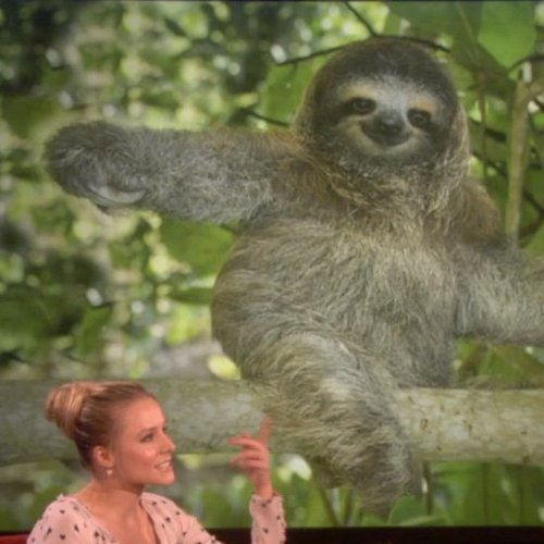 Video of Kristen Bell's Reaction to Sloths at on The Ellen DeGeneres Show
