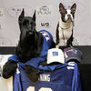 Pets Wearing Sports Team Gear
