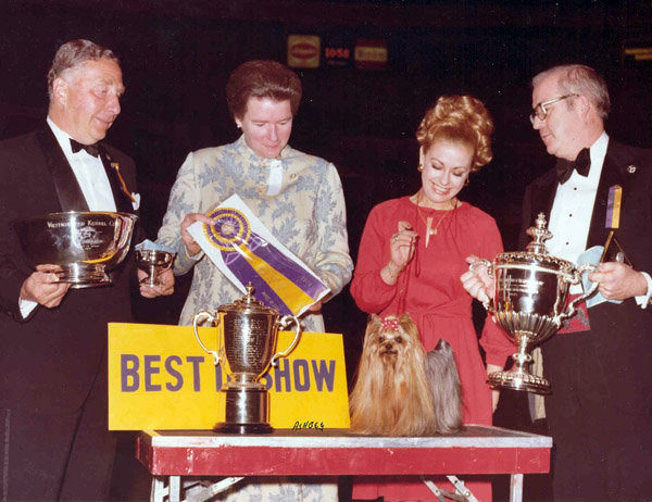 Ch Cede Higgins is the only Yorkshire terrier to take home the prize. She won in 1978. Source: American Kennel Club Archives