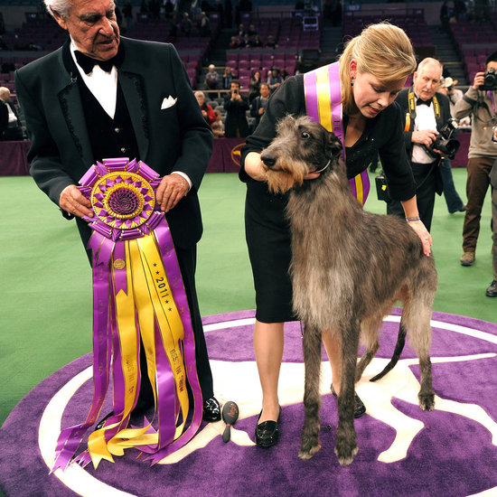 Trailblazers: First-Time Westminster Best in Show Winners