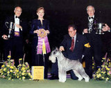 Ch Parsifal Di Casa Netzer, a standard schnauzer, won in 1997. Source: American Kennel Club Archives