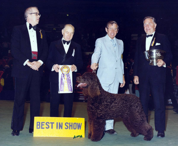 Ch Oak Tree's Irishtocrat, an Irish water spaniel, won in 1979. Source: American Kennel Club Archives