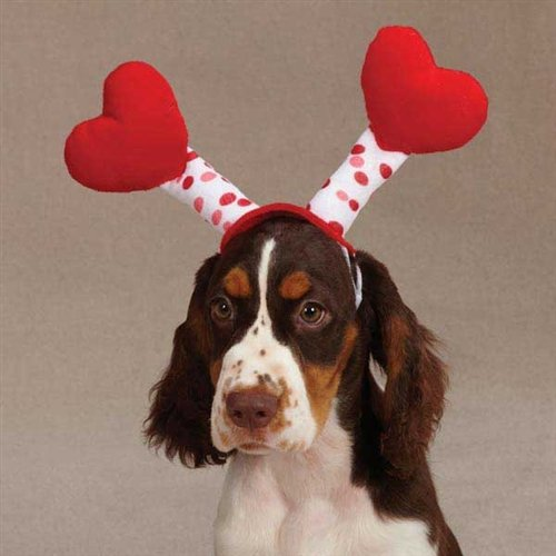 We couldn't resist. Maybe if you give your dog those treats, he'll even let you wear these Love Bug antennae.