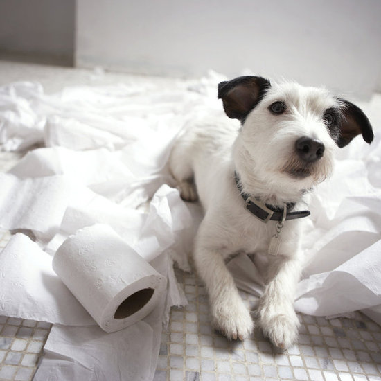 5 Harmful Pet Toxins Lurking Around Your House