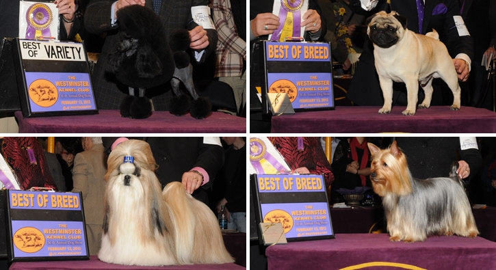 Best of Breed: Toy Division