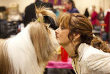 Tibetan Terrier Reese gets a nose nuzzle backstage.