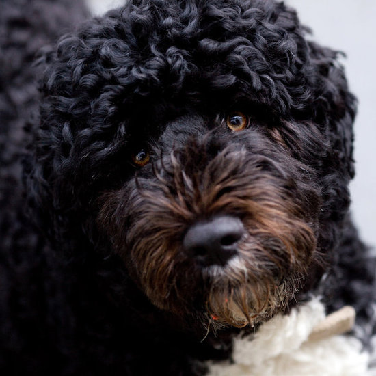Hail to the Pooch: Saluting First Dog Bo on Presidents' Day