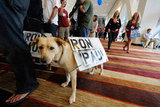 Keelut and his owner wait to hear Ron Paul speak at the California Republican Party Convention in September.