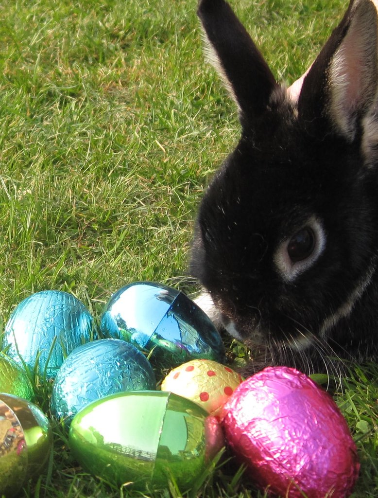 Today, the nests have become ornate baskets, and children hunt for their treats, which are hidden by the elusive Easter bunny! Source: Flickr User somewhereintheworldtoday