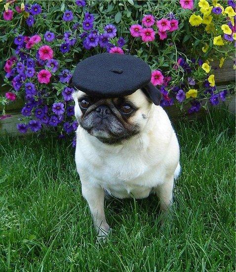A Pug In Paris