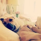 Lauren Conrad captured her pup just waking up.  Source: Instagram user laurenconrad