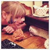 Taylor Swift played around with her cat, Meredith. Source: Twitter user taylorswift13