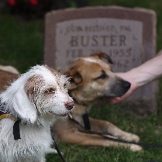 War Dog Memorial at Hartsdale Pet Cemetery Pictures