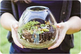 Build Your Own Terrarium