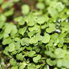 How to Use Microgreens