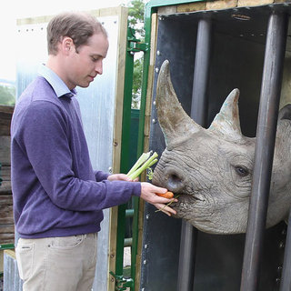 Prince William Pictures With Rhinos