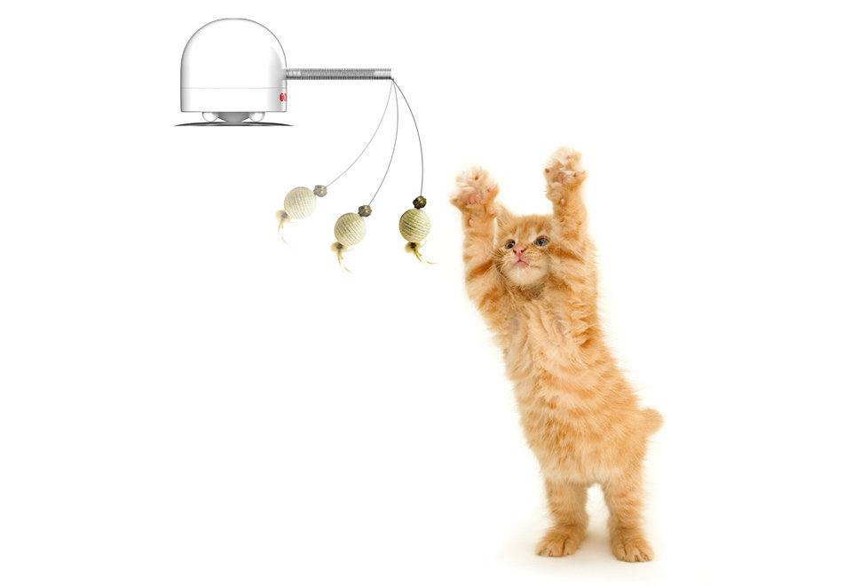 Robotic Cat Toy ($30)